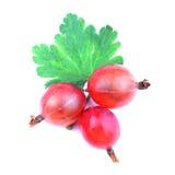Czerwona agrestowa owoc odizolowywająca na bielu Zdjęcia Stock