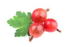 Czerwona agrestowa owoc z liściem odizolowywającym na bielu Fotografia Royalty Free