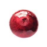 Czerwona cebula Obraz Royalty Free