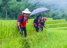 Czerwona Dao mniejszość etniczna w Wietnam fotografia stock