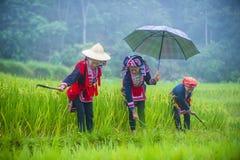 Czerwona Dao mniejszość etniczna w Wietnam fotografia royalty free