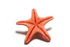 czerwona denna gwiazda Obraz Royalty Free