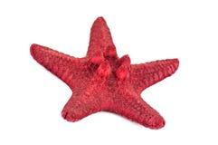 Czerwona denna gwiazda Obrazy Stock
