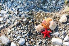 Czerwona Denna gwiazda, morze skorupy, kamień plaża, czysta woda zdjęcia stock