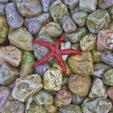 Czerwona denna gwiazda na kolorowej otoczak plaży Obraz Royalty Free
