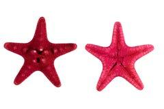 Czerwona denna gwiazda odizolowywająca na białym tle Zdjęcia Royalty Free