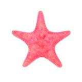 Czerwona denna gwiazda odizolowywająca na białym tle Obrazy Stock