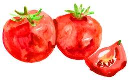 Czerwona dojrzała tomats akwarela Zdjęcia Stock
