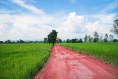 Czerwona droga przez środka ryżowi pola, Zdjęcia Stock