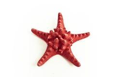 czerwona gwiazda morska Obrazy Royalty Free