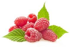 Czerwona jagodowa malinka Zdjęcie Royalty Free