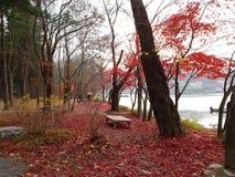 Czerwona jesień 2 zdjęcie royalty free