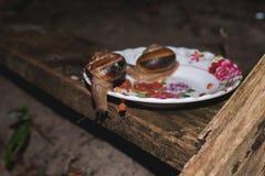 Czerwona Kambodżańska mrówka kraść od pucharu psiego jedzenia Fotografia Stock
