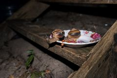 Czerwona Kambodżańska mrówka kraść od pucharu psiego jedzenia Obrazy Stock