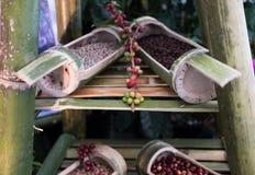 czerwona kawowa jagoda kawowa fasola w bambusowym bagażniku Obraz Stock