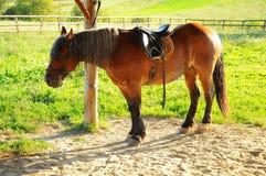 Czerwona końska jazda Obraz Stock