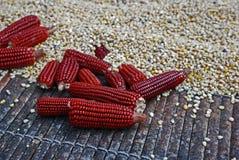 Czerwona kukurudza Zdjęcia Royalty Free