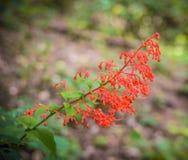 Czerwona kwiat roślina Obrazy Royalty Free