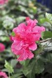 czerwona kwiat wiosna Zdjęcie Stock