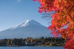Czerwona liść klonowy góra Fuji Obrazy Royalty Free
