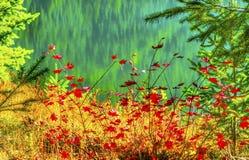 Czerwona liść klonowy zieleni Żółtego złota Snoqualme Jeziorna przepustka Washingto Fotografia Royalty Free