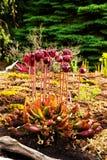 Czerwona miotacz roślina zdjęcia stock