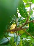 Czerwona mrówka na gałąź Zdjęcie Stock