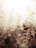 Czerwona natal trawa (płytki dof abstrakcjonistyczny tło, grże kolory, p Fotografia Stock
