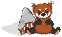 Czerwona panda z kamieniem Obrazy Stock