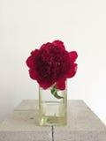 Czerwona peonia w wazie Zdjęcie Royalty Free