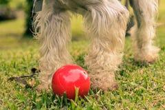 Czerwona piłka Zdjęcie Stock