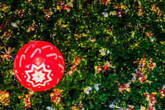 Czerwona piłka na choince Zdjęcie Stock