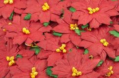 Czerwona poinsecj bożych narodzeń rama fotografia stock
