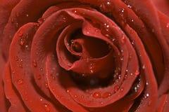 - czerwona róża ciemności Fotografia Royalty Free