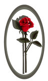 czerwona róża głęboka designer Fotografia Royalty Free