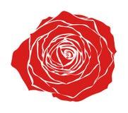 czerwona róża Fotografia Stock