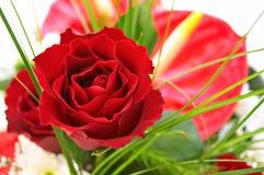 czerwona róża Obrazy Stock