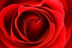 czerwona róża makro Zdjęcia Royalty Free