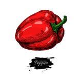Czerwona ręka rysująca Dzwonkowego pieprzu wektorowa ilustracja Jarzynowy Isola Fotografia Stock