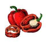 Czerwona ręka rysująca Dzwonkowego pieprzu wektorowa ilustracja Jarzynowy przedmiot folujący, połówka i plasterki, Obrazy Royalty Free