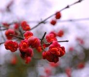 Czerwona roślina Obraz Royalty Free