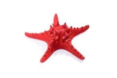 czerwona rozgwiazda Fotografia Royalty Free