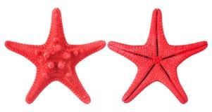 czerwona rozgwiazda Zdjęcia Stock