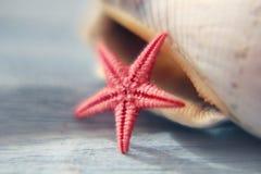 czerwona rozgwiazdy Fotografia Royalty Free