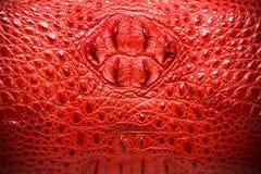 Czerwona Rzemienna tekstura, krokodyl skóry tło Zdjęcia Stock