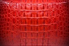 Czerwona Rzemienna tekstura, krokodyl skóry tło Zdjęcie Royalty Free