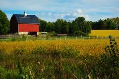 Czerwona stajnia z Złotymi sojami fotografia stock
