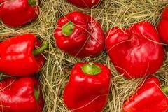 Czerwona tło tekstura, grupa paprica dzwonkowi pieprze Obraz Royalty Free