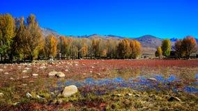 Czerwona trawa Zdjęcie Stock