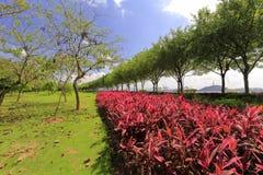 Czerwona trawa w gulangyu wysepce, Xiamen, porcelana Zdjęcie Royalty Free